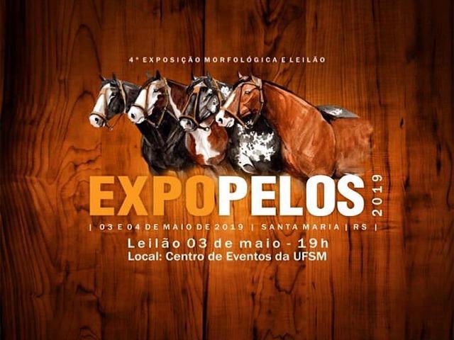 4º  Exposição Morfológica  e Leilão ExpoPelos 2019