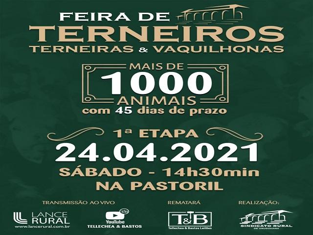 FEIRA DE TERNEIROS, TERNEIRAS E VAQUILHONAS