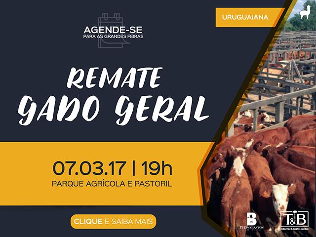 REMATE DE GADO GERAL