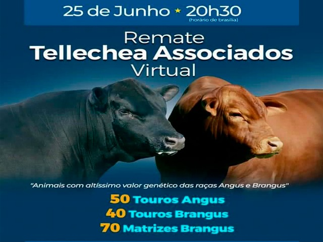 VIDEOS - REMATE VIRTUAL TELLECHEA ASSOCIADOS